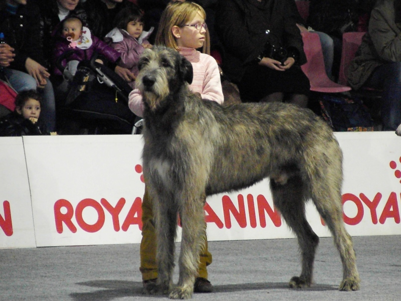 junior handler A